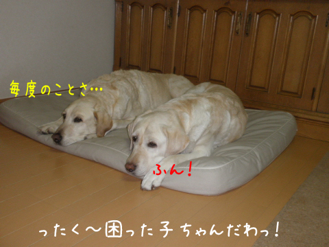 bed3_20110601115703.jpg