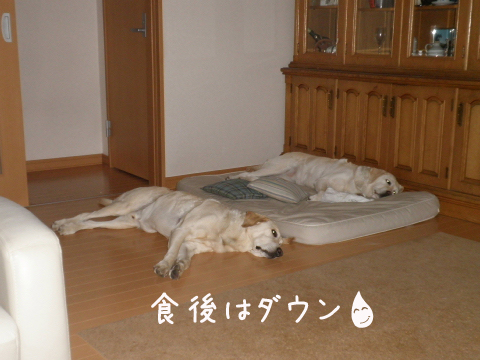 bed_20110706232511.jpg