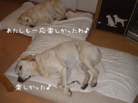 bed_20111006215715.jpg