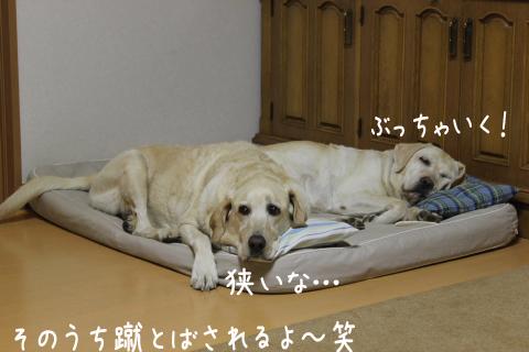 bed_20111022211514.jpg
