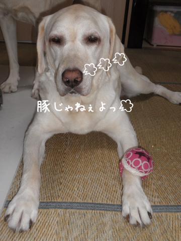 buta_20110915204554.jpg