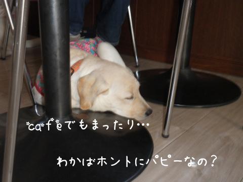 cafe_20111013222222.jpg