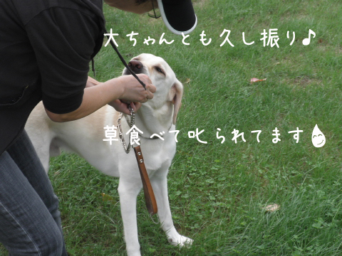 dai_20110907230847.jpg