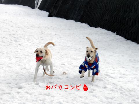 daimaru_20110329222321.jpg