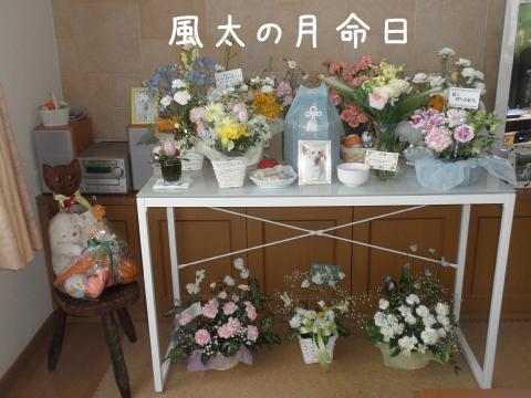 fuuta_20110420212220.jpg