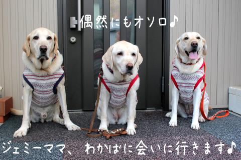 genkanmae_20111031220131.jpg