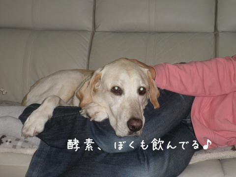 hahato_20111010231544.jpg