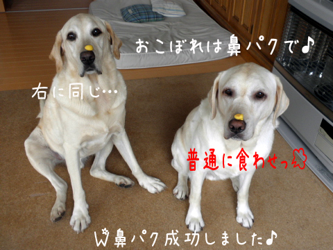 hanapaku_20110917205644.jpg