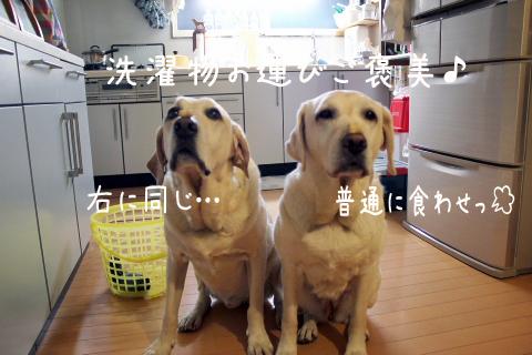 hanapaku_20111022211514.jpg