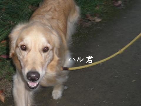 haru_20111016213035.jpg