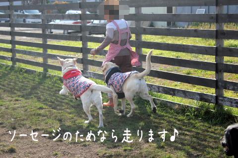 hasiru3.jpg