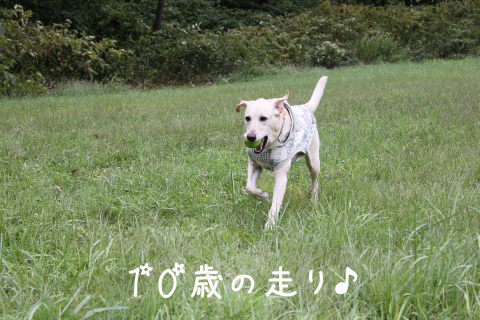 hasiru_20110920231751.jpg