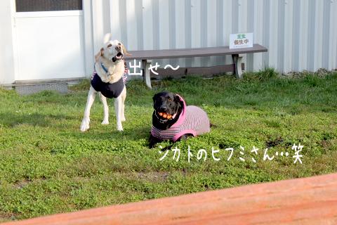 hihumimaru_20111029212615.jpg
