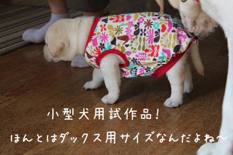 huku_20110731012759.jpg