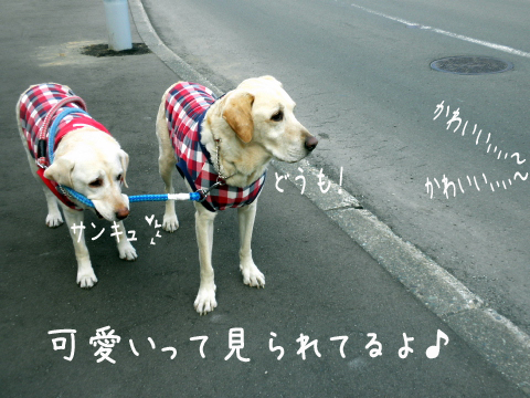 hutari_20110420211527.jpg