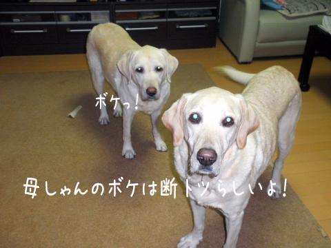 hutari_20111017211612.jpg