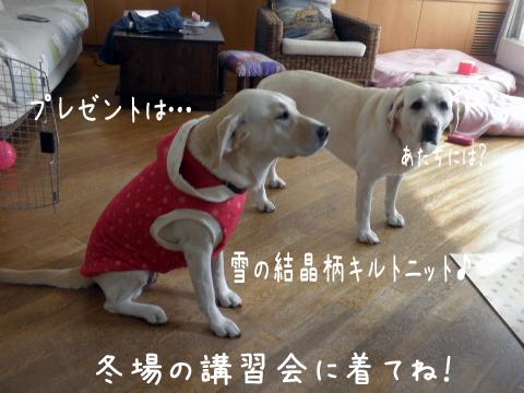 jemi1_20111012220455.jpg