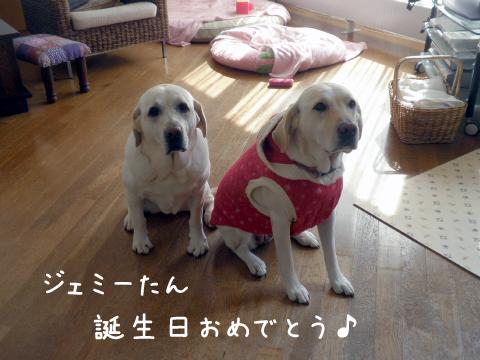 jemi2_20111012220455.jpg