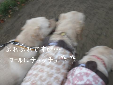 kaeri1_20111015185326.jpg