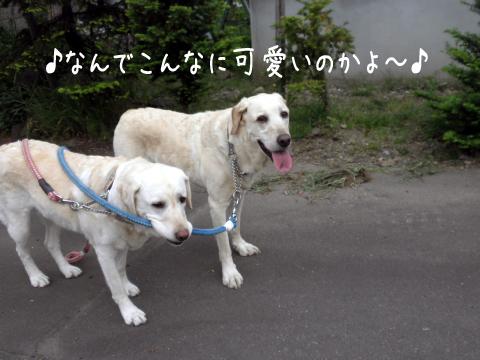 kaeri_20110609191430.jpg