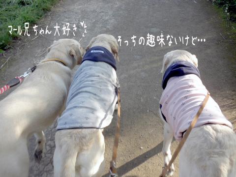 kaerimiti_20110721215522.jpg