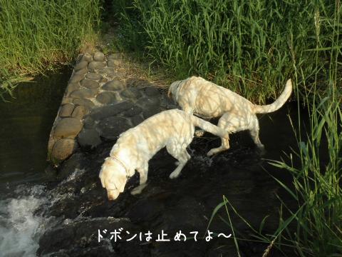 kawa1_20110702222821.jpg