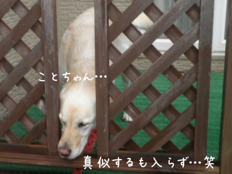 koto_20111012221226.jpg