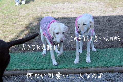 kotosyeri.jpg