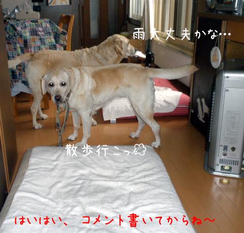 kubiwa1_20110921215146.jpg