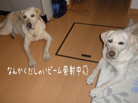 kudasai_20110714234531.jpg