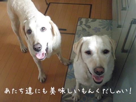 kudasai_20110726223024.jpg