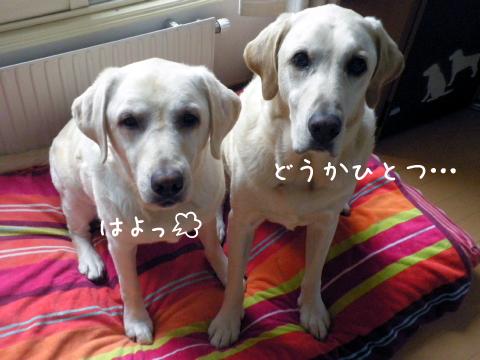 kudasai_20110906214853.jpg