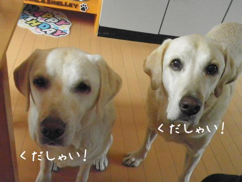 kudasai_20110912211850.jpg