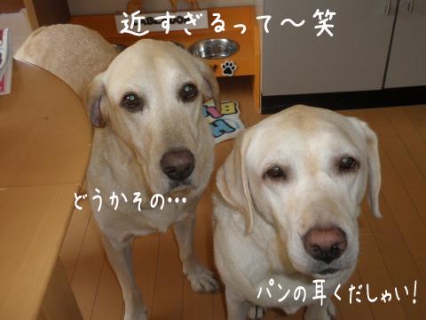 kudasai_20110928225313.jpg