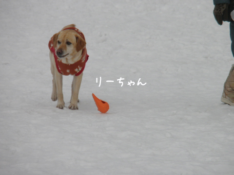 lee_20110308210845.jpg