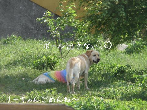 leemaru_20110612185617.jpg