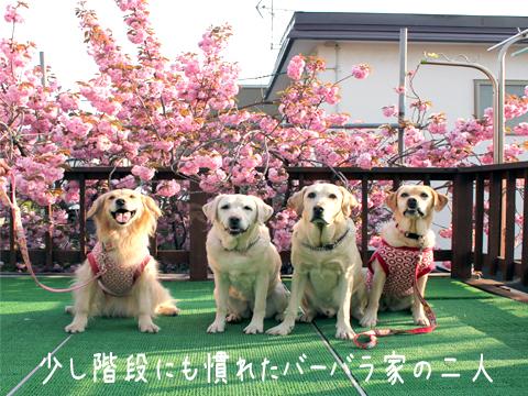 lola_20110527205313.jpg