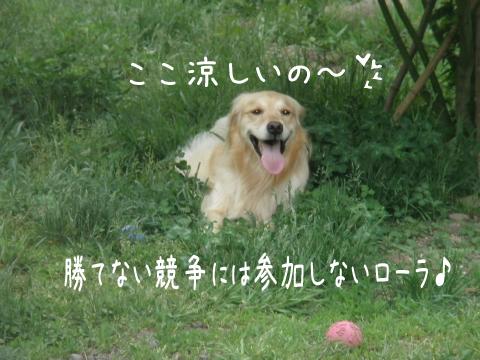 lola_20110609191214.jpg