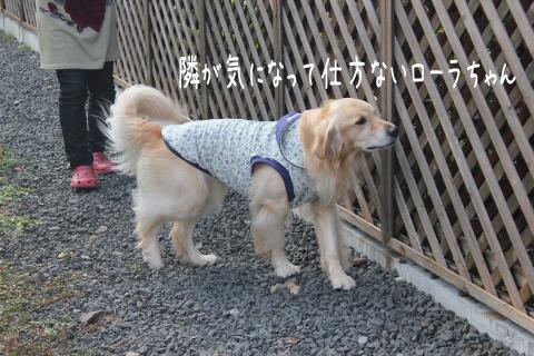 lola_20111028223414.jpg