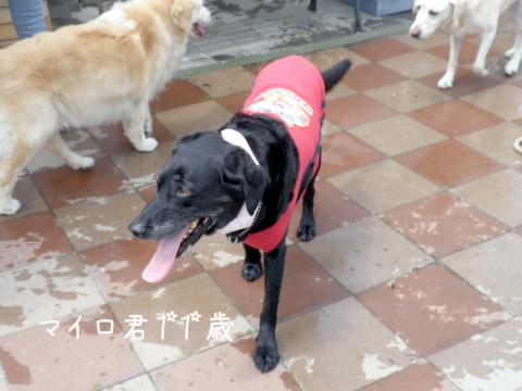 mairo_20110710202830.jpg
