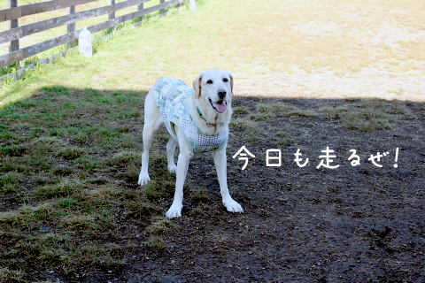 maru1_20111020212101.jpg