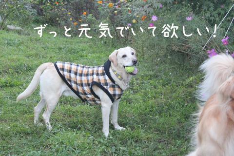 maru2_20110925221920.jpg