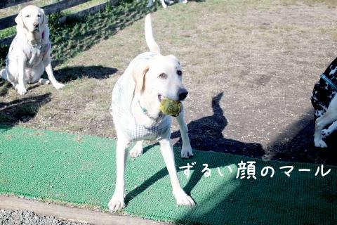 maru2_20111020212101.jpg