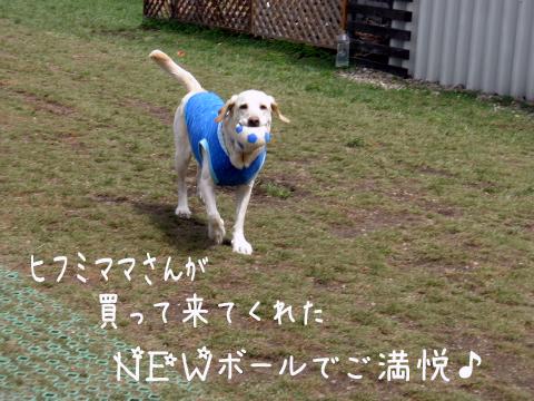 maru_20110505234811.jpg
