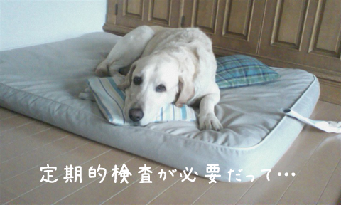 maru_20110608235315.jpg