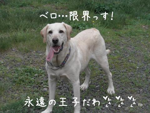 maru_20110609211045.jpg