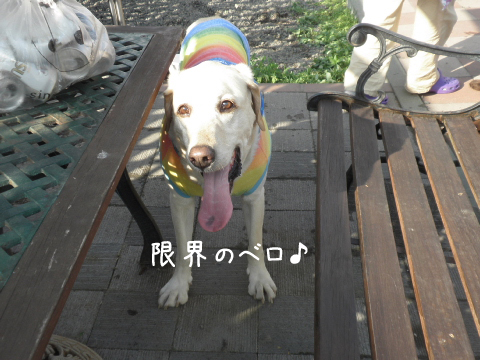 maru_20110612185948.jpg
