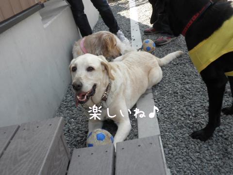 maru_20110616234825.jpg