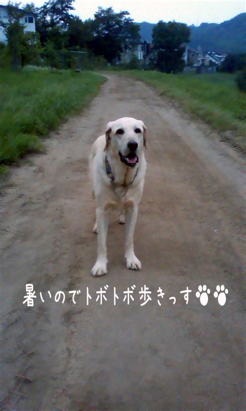 maru_20110728000346.jpg