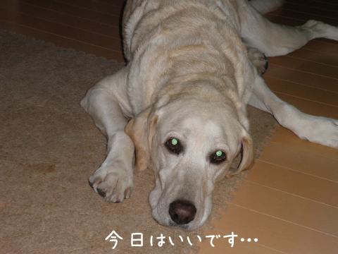 maru_20110902224516.jpg